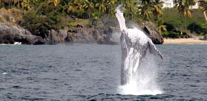 sc-ballenas