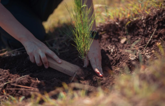 Empleados de Banco Popular siembran 22,400 árboles en Plan Sierra