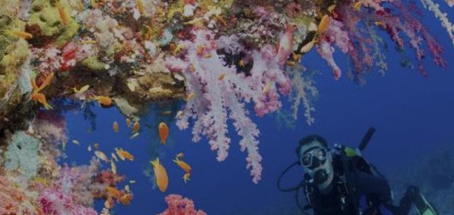 Green Fins Hub: propuesta para un turismo marino sostenible
